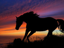 Horse Silhouette Sunset. Horse silhouette in front of Oregon coast sunset Stock Photos