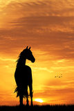 Horse silhouette at sunset Stock Photos
