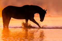 Horse silhouette sunset Royalty Free Stock Image