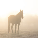 Horse silhouetted against sunrise through heavy fog. In sepia tones Stock Photos