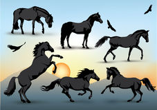 Horse silhouettes Royalty Free Stock Photos