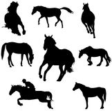 Horse silhouettes vector. Black horses silhouettes isolated on white Stock Images