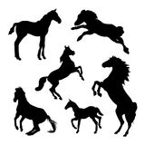 Horse silhouettes on white background. Set of vector illustration Stock Images
