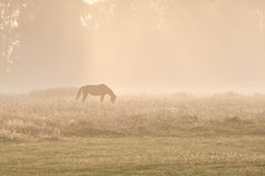 Horse silhuette in sunrise fog Royalty Free Stock Photo