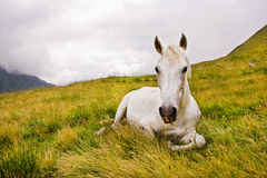 Horse sitting Stock Photography