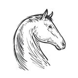 Horse sketch. Farm animal, steed vector illustration. Isolated on white background Stock Image