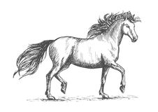 Horse sketch with galloping arabian racehorse Stock Photos
