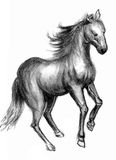 Horse sketch Stock Images