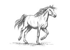 Horse sketch with running racehorse. Arabian horse sketch of running racehorse. Purebred mare horse is playing on a pasture. Horse racing or riding club badge Royalty Free Stock Image
