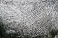 Horse hair Royalty Free Stock Image