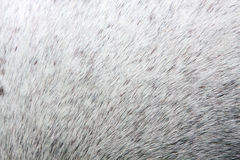Horse Skin royalty free stock images