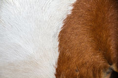 Horse skin Stock Image