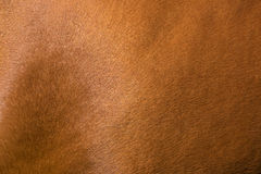 Horse skin Stock Images
