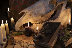 Horse skull, evil book and magic objects. Mystic still life with scary occult objects, horror Halloween and black magick concept stock image