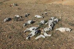 Horse Skulls and Bones Stock Image