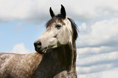 Horse and sky Stock Images