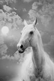 Horse and sky Royalty Free Stock Image