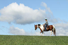 Horse and sky Stock Photography