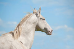 Horse and sky Royalty Free Stock Images