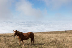Horse, sky and fog. Some horses pasturing on top a mountain, beneath a big blue sky with some very close clouds, and over a valley full of fog stock photos