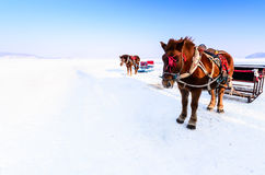 Horse Sled. Two horse sleds standing on snow field Royalty Free Stock Images