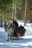 Horse sledge. Typical Russian fun - winter horse sledge riding. Editorial use only Stock Images