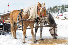 Horse sledge, alternative winter transport Stock Images