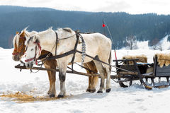 Horse sledge, alternative winter transport Royalty Free Stock Image