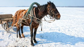 Horse with sledge at the bank of frozen river stock video