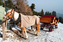 Horse Sledge in Dolomiti, Italy Royalty Free Stock Photos