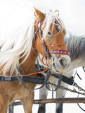Horse sledge, tourist attraction Royalty Free Stock Images