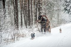 Horse with sledge in winter countryside Stock Photography