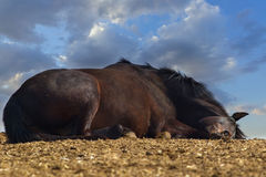Horse sleep Royalty Free Stock Photos
