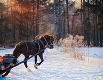 Horse and sleigh Royalty Free Stock Photos