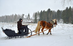 Horse and sleigh. Horse and old style sleigh with woman driver Royalty Free Stock Images