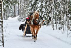 Horse and sleight in snowy forest Royalty Free Stock Photos