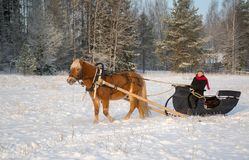 Horse and sleight in winter with woman driver. In Finland Stock Image