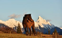 Horse and Slesse Mountain at sunset Stock Photography