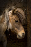 Horse. Small horse portrait showing a tender feel Stock Images