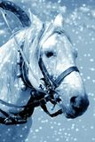 Horse in snow. Under a blueish tone Stock Image