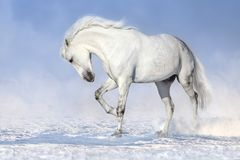 Horse in snow royalty free stock photography