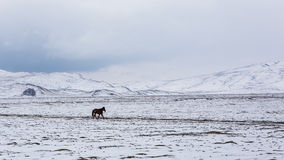 Horse in snow Stock Image