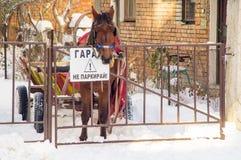 Horse in the snow garage in Pomorie, Bulgaria Stock Photos