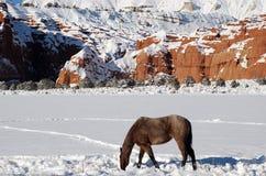 Horse Snow Scenic Stock Image