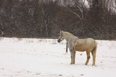 Horse on snow Royalty Free Stock Photos