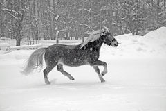 Horse in snowstorm Stock Photos