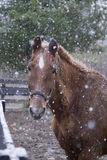 A horse on a snowy day Stock Photography