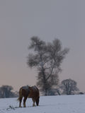 Horse in Snowy Paddock Stock Image