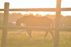 Horse in the soft light of sunset Stock Photos