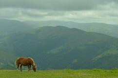 Horse in solitude. A horse grazing in the meadows of Cantabria Stock Photos